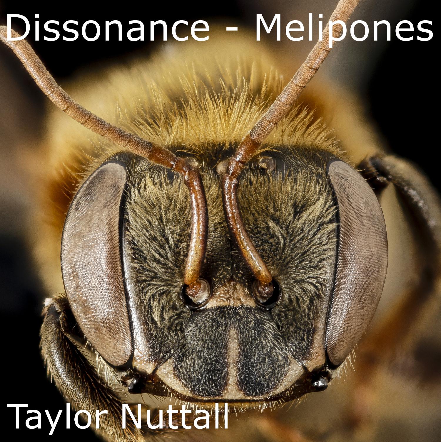 Dissonance - Melipones track art